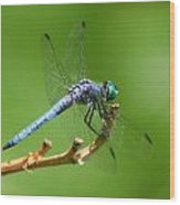 Blue Dragonfly Start Up Wood Print