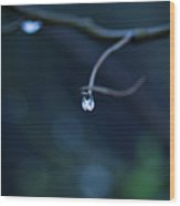 Blue Drop Wood Print by Photography by Gordana Adamovic Mladenovic