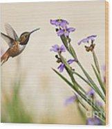 Blue-eyed Grass Wildflowers And Rufous Hummingbird Wood Print