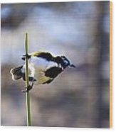 Blue Faced Honey Eater V3 Wood Print