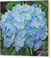 Blue Garden Flower Wood Print