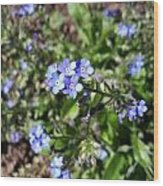 Blue Forget Me Not Wood Print