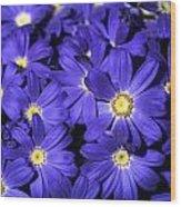 Blue Gerber Wood Print by Al Hurley