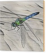 Blue-green Dragonfly Wood Print