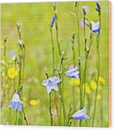 Blue Harebells Wildflowers Wood Print
