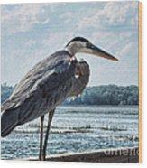 Blue Heron 1 Wood Print