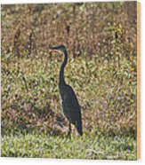 Blue Heron At Valley Forge Wood Print