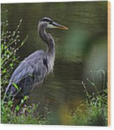 Blue Heron Observing Pond - 6955k Wood Print