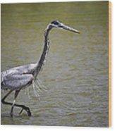 Blue Heron On The Hunt  Wood Print