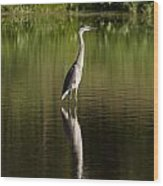 Blue Heron Reflection Wood Print