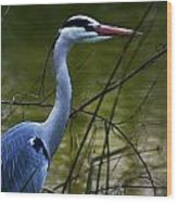 Blue Heron Vondelpark Amsterdam Wood Print