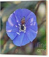 Blue Honey Bee Flower Wood Print