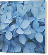 Blue Hydrangea Close-up Wood Print