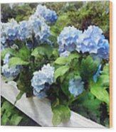 Blue Hydrangea On White Fence Wood Print