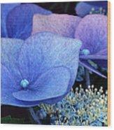 Blue Hydrangea. Wood Print