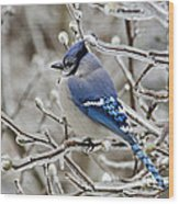 Blue Jay - D003568 Wood Print