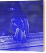 Blue Jay Has The Blues Wood Print