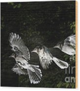 Blue Jay In Flight Wood Print