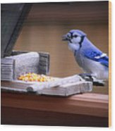 Blue Jay On Backyard Feeder Wood Print