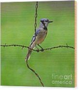 Blue Jay On Crossed Wire Wood Print