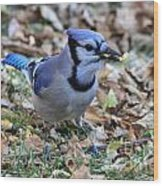 Blue Jay With A Piece Of Corn In Its Mouth Wood Print