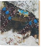 Blue-knee Hermit Crab Wood Print