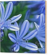 Blue Lily Of The Nile Wood Print