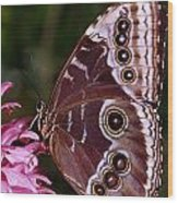 Blue Morpho Butterfly On Flower Wood Print