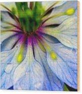 Blue Nigella Wood Print