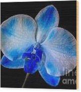 Blue Orchid Bloom Wood Print