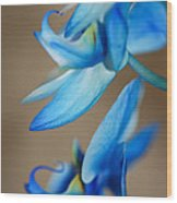 Blue Orchid  Wood Print