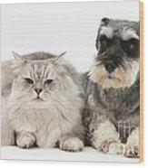 Blue-point Kitten & Miniature Schnauzer Wood Print