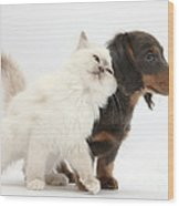 Blue-point Kitten And Dachshund Pup Wood Print
