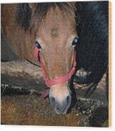 Blue Pony Eyes Wood Print