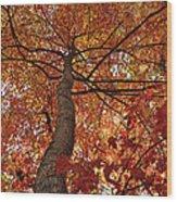 Blue Ridge Autumn Leaves 1.3 Wood Print