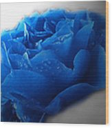 Blue Rose With Drops Wood Print