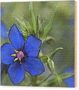 Blue Royalty Wood Print