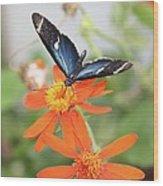 Blue Sara On Orange Sunflower Wood Print