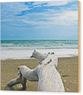 Blue Sea And Sky With Log On The Beach Wood Print
