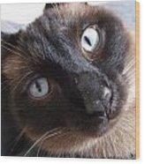 Blue Siamese Eyes Wood Print