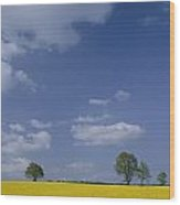 Blue Sky Covers A Yellow Field Wood Print