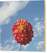 Blue Sky Nature Art Prinst Red Dahlia Flower Wood Print