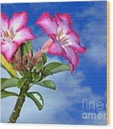 Blue Sky Pink Flower Wood Print