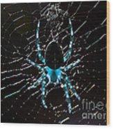 Blue Spider Wood Print