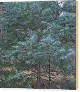 Blue Spruce Wood Print