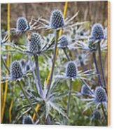Blue Stem Sea Holly Wood Print