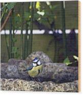 Blue Tit On Bird Bath Wood Print by Jane Rix
