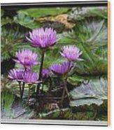 Blue Tropical Water Lilies Wood Print