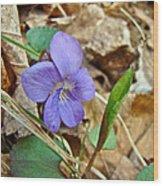 Blue Violet Wildflower - Viola Spp Wood Print