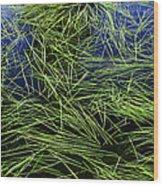 Blue Water Green Grass Glacier National Park Wood Print